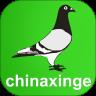 中国信鸽信息网app下载苹果